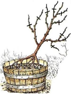 la plantation d 39 un arbre ou d 39 un arbuste. Black Bedroom Furniture Sets. Home Design Ideas