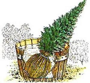 La plantation d 39 un arbre ou d 39 un arbuste - Plantation arbre en motte ...