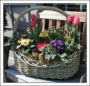 bacs et jardini res de printemps plantation des bulbes de printemps. Black Bedroom Furniture Sets. Home Design Ideas