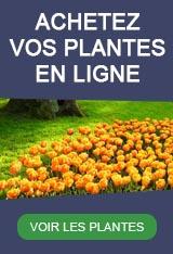 Graines Et Plantes Calendrier Lunaire Mars 2020.Calendrier Lunaire 2019 2020 Jardiner Planter Semer