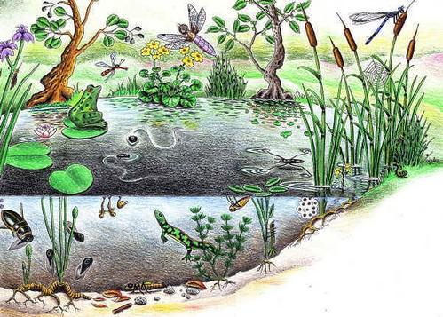 comment favoriser la biodiversit dans le jardin comment attirer les animaux dans son jardin. Black Bedroom Furniture Sets. Home Design Ideas