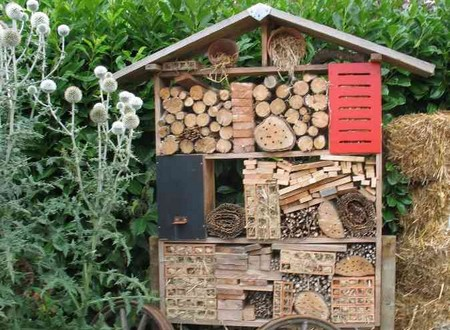 Comment favoriser la biodiversit dans le jardin comment - Comment attirer les oiseaux dans son jardin ...