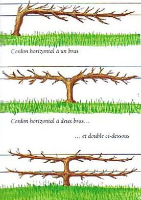 La taille des arbres fruitiers - Calendrier taille arbres fruitiers ...