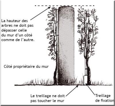 Les arbres fruitiers au jardin - Comment planter des kiwis ...