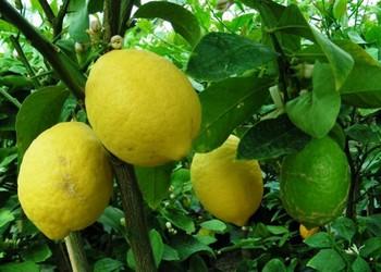 Protection des plantes fruitiers et l gumes contre le gel - Plantes qui ne craignent pas le gel ...