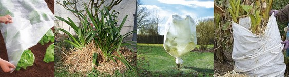 Protection des plantes fruitiers et l gumes contre le gel for Protection plante gel