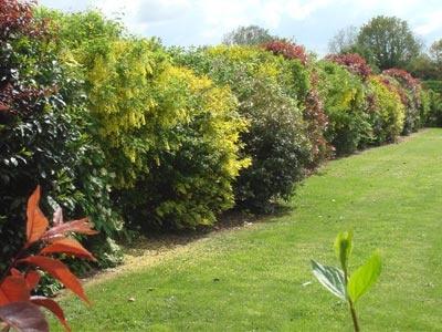 Un jardin facile d 39 entretien for Jardin avec arbustes