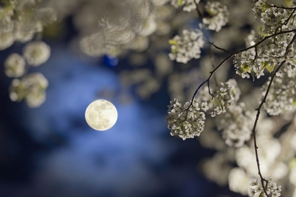 Comprendre le calendrier lunaire pour le jardin et le potager for Calandrier lunaire pour le jardin