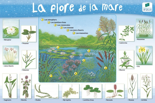La mare naturelle for Mare a poisson