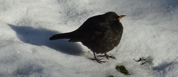 nourrir les oiseaux en hiver nourrissage des oiseaux mangeoires pour oiseaux. Black Bedroom Furniture Sets. Home Design Ideas