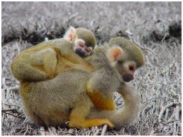 Un gros dodo sur le dos de Maman !