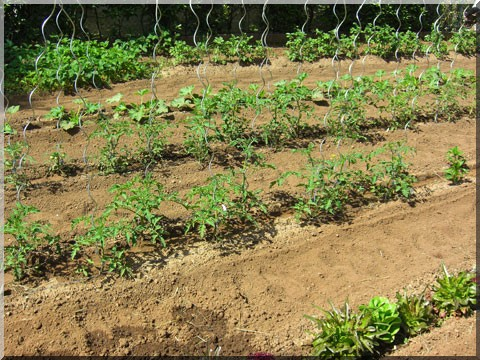Cr er un potager for Amenager son jardin en ligne