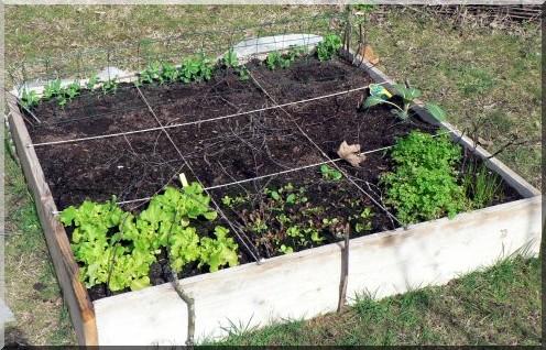 Cr er un potager for Organiser son jardin potager