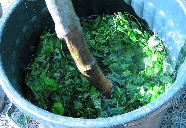 Les engrais maison base de purin et les engrais verts - Engrais vert d automne ...