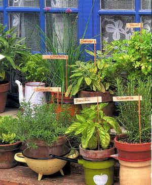 culture daromatiques en pots - Planter Des Herbes Aromatiques En Jardiniere
