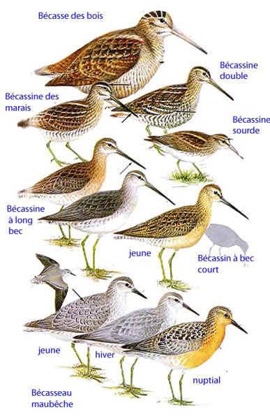 Les oiseaux de nos jardins les oiseaux de jardins for Oiseau a long bec