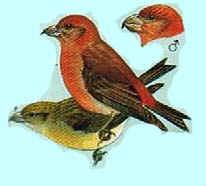 Les oiseaux de nos jardins les oiseaux de jardins - Les oiseaux de nos jardins et de nos campagnes ...