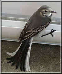 les oiseaux de nos jardins les oiseaux de jardins oiseaux d 39 europe. Black Bedroom Furniture Sets. Home Design Ideas