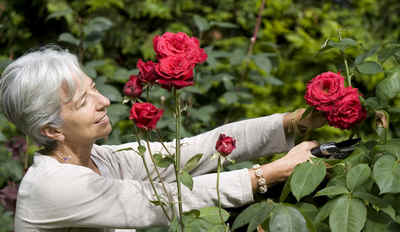 Les personnalit s au jardin jardin priv inauguration - Laurent gerra la cabane au fond du jardin ...