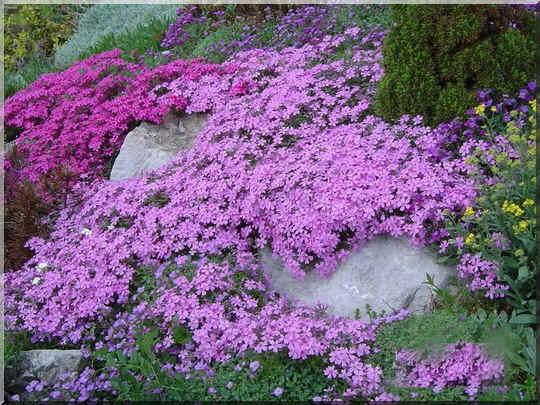 Les plantes couvre sol plantes pour combler les espaces vides - Plante couvre sol sans entretien ...
