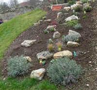 Aménagement d\'une rocaille au jardin, une association ...