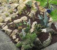 Aménagement d\'une rocaille au jardin, une association judicieuse ...