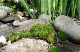 Rocaille Ombre aménagement d'une rocaille au jardin, une association judicieuse